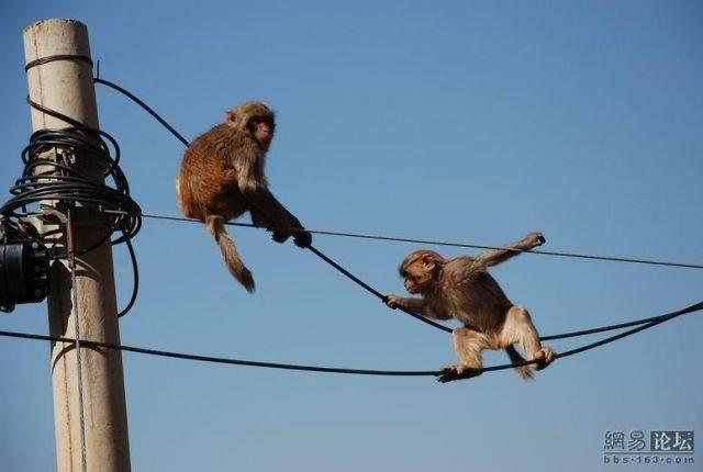 funny_monkey_01.jpg
