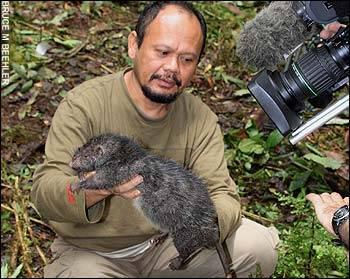 giant-rat.jpg