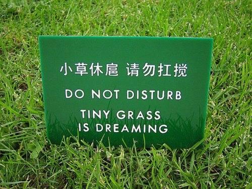 GrassDreaming.jpg