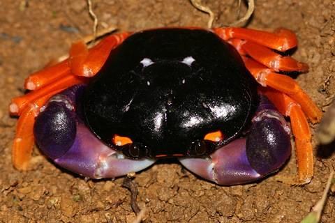 halloween-crab.jpg
