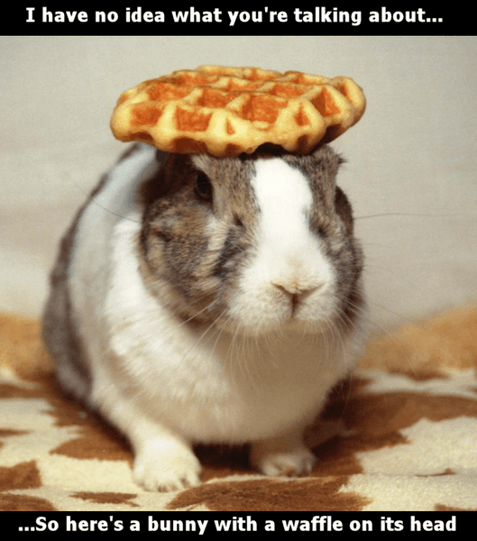 Heres_a_bunny_with_waffle.png