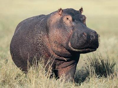hippo-sunscreen-1.jpg