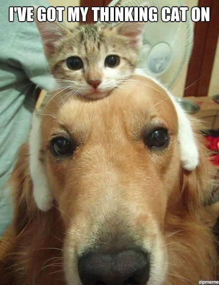 ive-got-my-thinking-cat-on.jpg