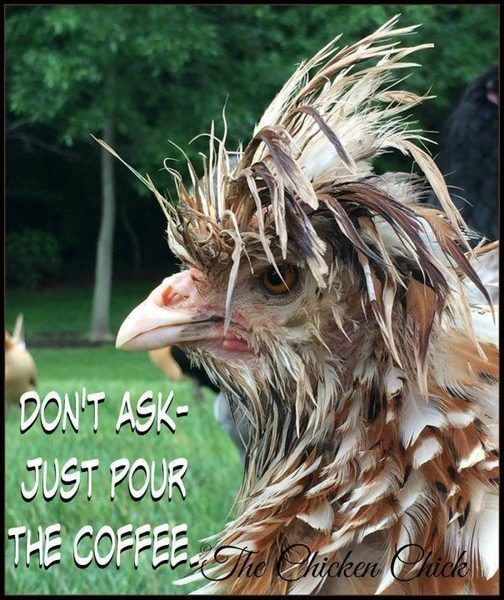 just pour the coffee.jpg