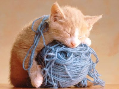 kitten_yarn_640.jpg