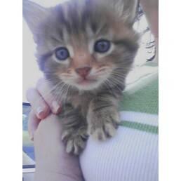 kittenbp9.jpg