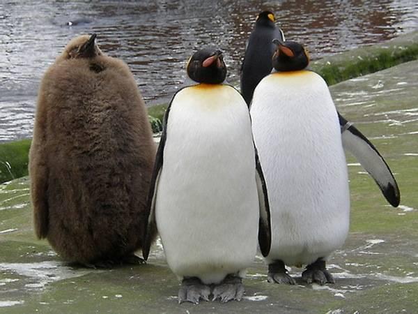 late_bloomer_penguin.jpg