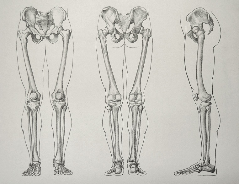 Leg-Bones-16-5-by-Drawing-Academy.jpg