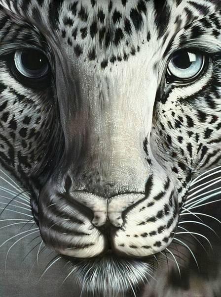 Leopard-Optical-Illusion.jpg