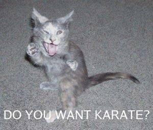 lol-cats-3-final.jpg