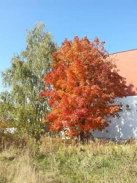 marcin_autumn_leaves-2.jpg