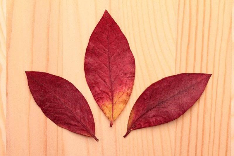marcin_autumn_leaves.jpg