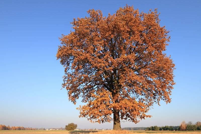marcin_autumnal.jpg