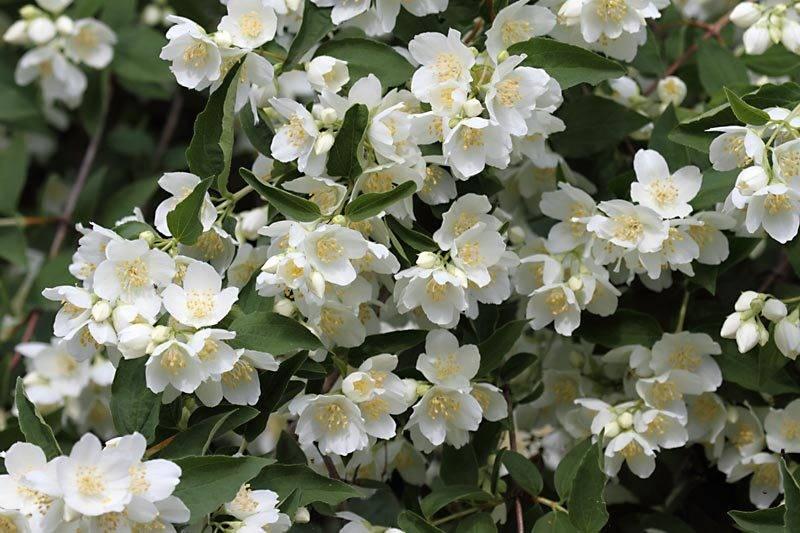 marcin_flowers.jpg