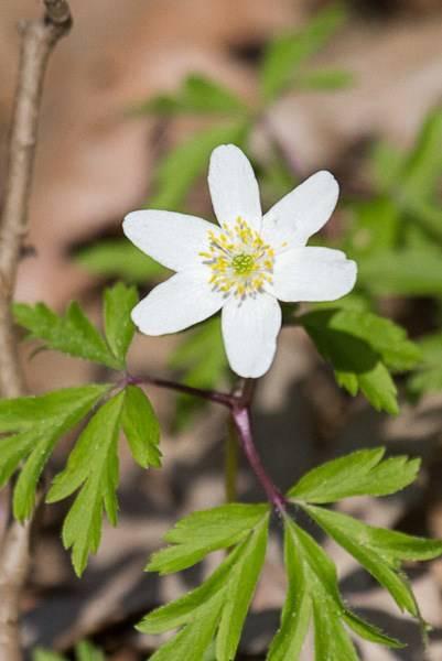 marcin_flowers2.jpg
