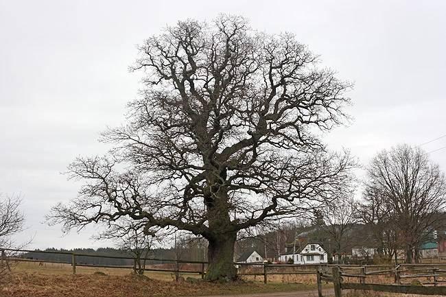 marcin_tree1.jpg