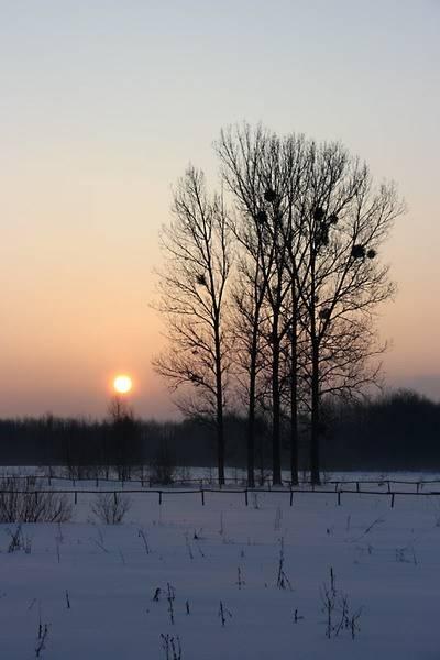 marcin_trees.jpg