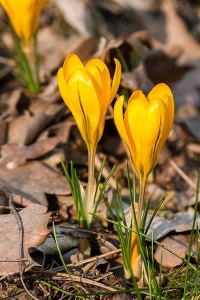 marcin_welcome_spring.jpg
