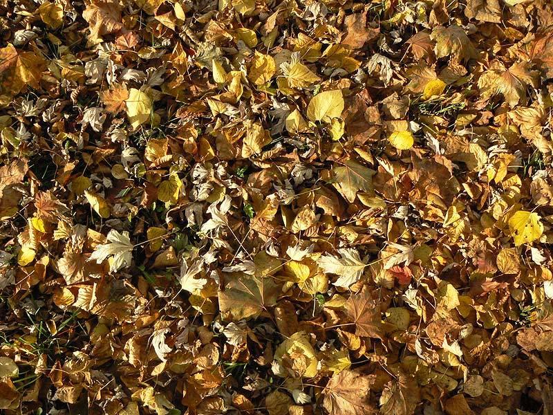 marzena_autumn_leaves.jpg