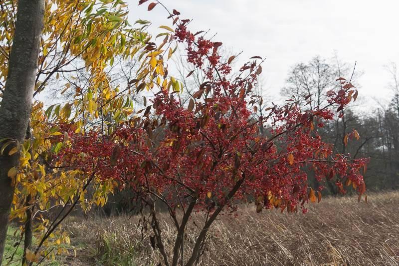 marzena_Autumn_Leaves01.jpg
