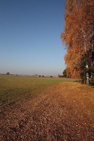 marzena_autumnal.jpg