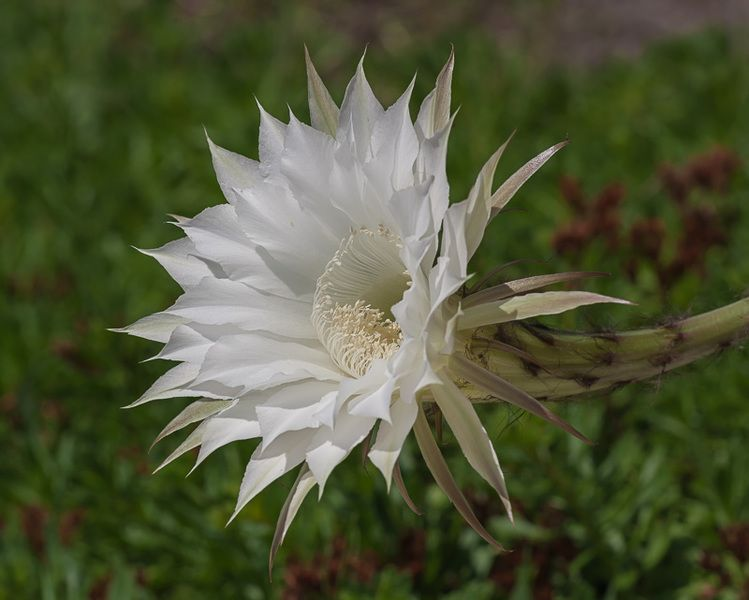 marzena_bring_me_a_flower-jpg.196336.jpg