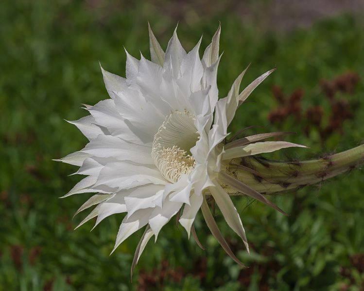 marzena_bring_me_a_flower.jpg