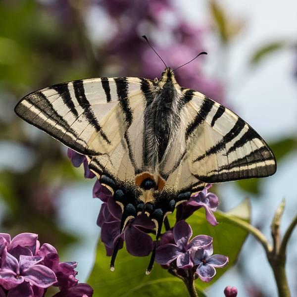 marzena_butterfly1.jpg