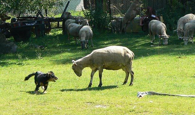 marzena_f_animals7.jpg