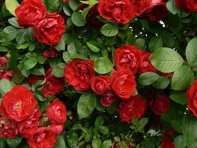 marzena_flowers7.jpg