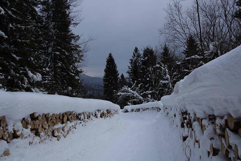 marzena_forest.jpg