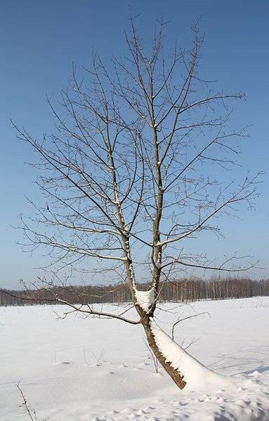 marzena_tree.jpg