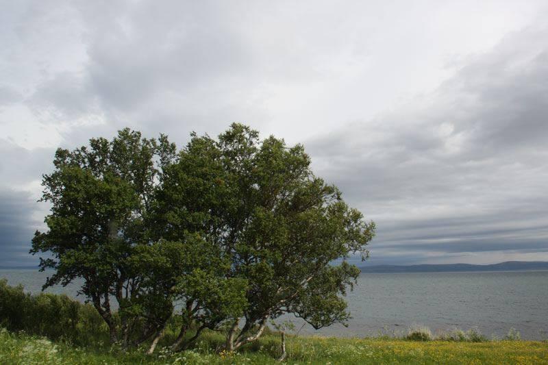 marzena_trees2.jpg