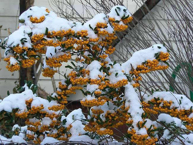 marzena_winter.jpg