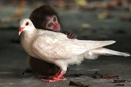 monkeypigeonuppa_450x300.jpg