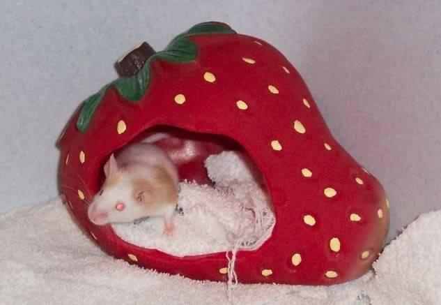 Mouse-farfignewton.jpg