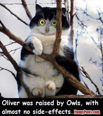 Owl-cat.jpg