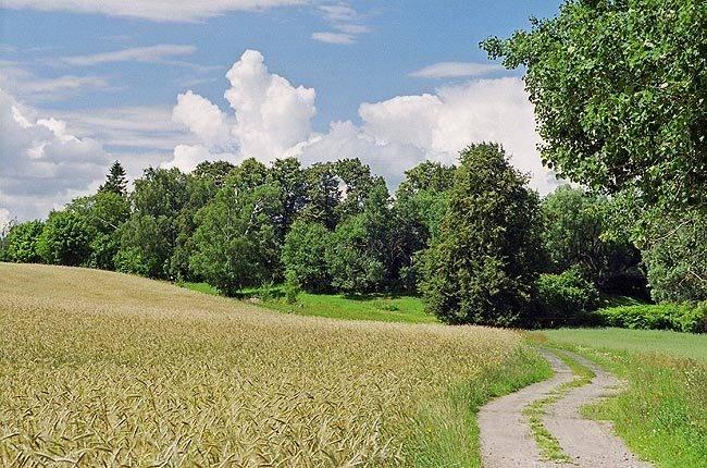 path_marcin1.jpg