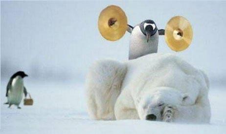 penguin-polar.jpg