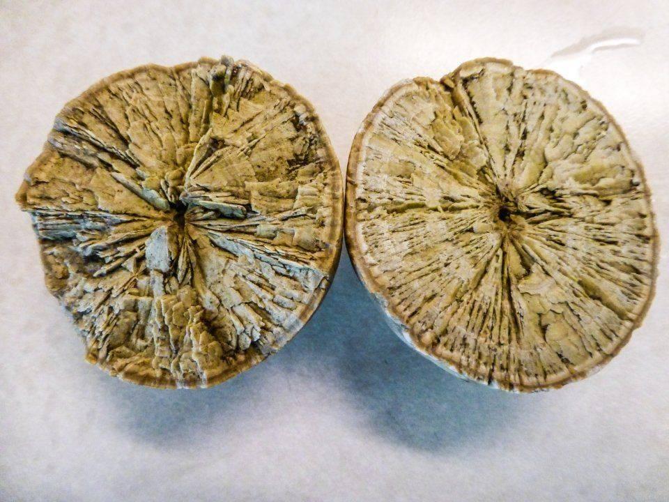petrified citrus fruit (1)_edited.jpg