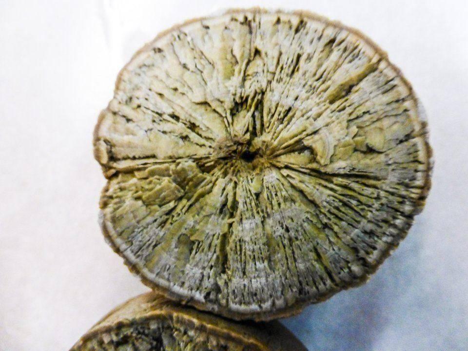 petrified citrus fruit (2)_edited.jpg