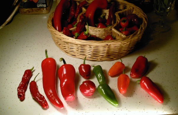 pf.2014.11.04.0813.pattis.peck.of.unpickled.peppers.jpg