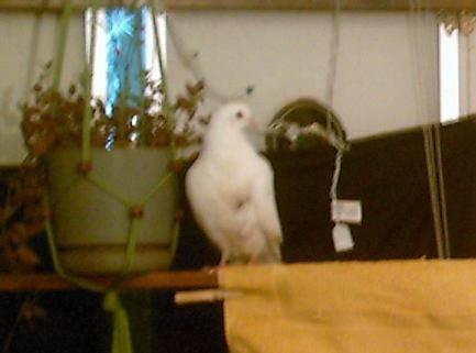 pf_birdie_2009_01_10_IMG_0051_cropped.JPG