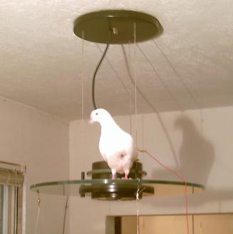 pf_birdie_dr_lamp_IMG_0048.JPG