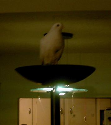 pf_torchlamp_roost_IMG_0046.JPG