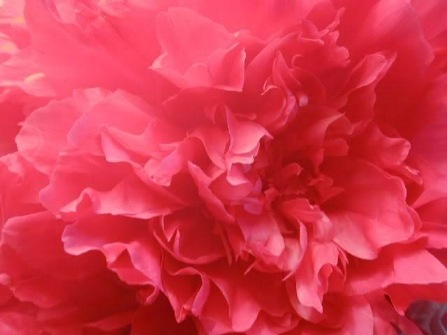 PinkFlower5035_640x480.jpg