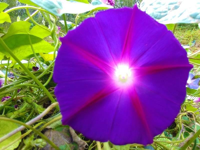 purple-sender-copy-jpg.jpg
