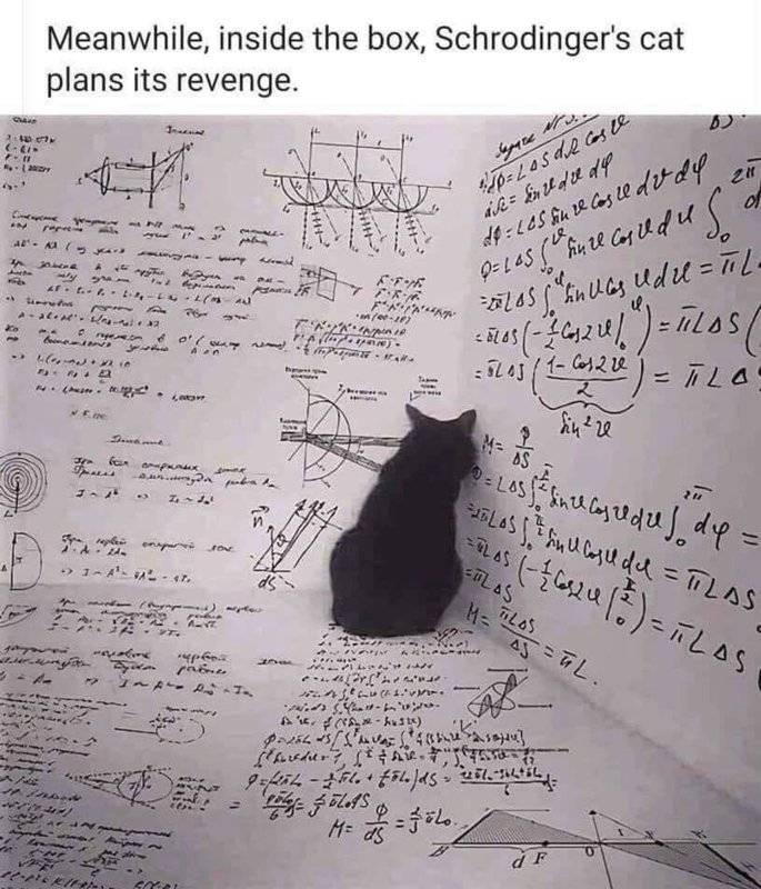 Schrodinger's cat.jpg