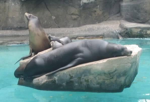 SeaLionsbasking.jpg