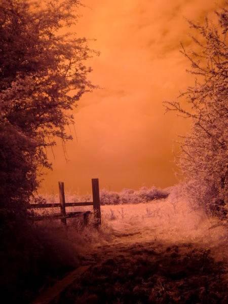 seeinginfrared.jpg